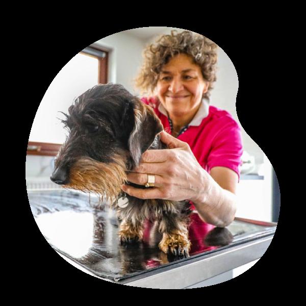 Docteur Nathalie Simon   Cabinet vétérinaire et ostéopathie animale petits animaux à Sprimont Ostéopattes