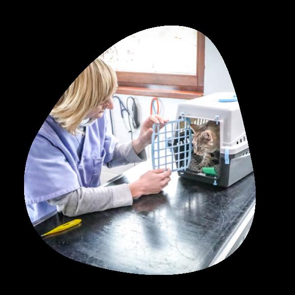 Docteur Charlotte Lausberg | Cabinet vétérinaire et ostéopathie animale petits animaux à Sprimont Ostéopattes