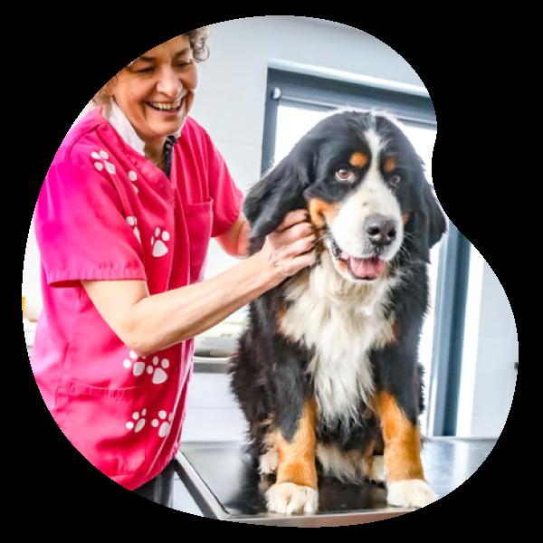 Docteur Nathalie Simon | Cabinet vétérinaire et ostéopathie animale à Sprimont pour petits animaux