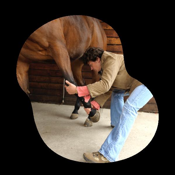 Docteur Nathalie Simon   Vétérinaire et ostéopathe animale chevaux